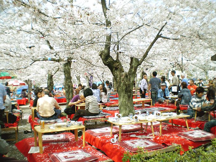 vivre au Japon, le Hanami - Jeunes à l'étranger